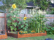We're experts in creating and maintaining your Raised Garden Beds